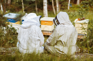Rear view of beekeepers relaxing on field with beehives in backgroundの写真素材 [FYI02137057]