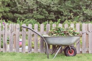 Wheelbarrow full of weeds by fence at farmの写真素材 [FYI02137206]