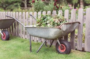 Wheelbarrow full of weeds at farmの写真素材 [FYI02137536]