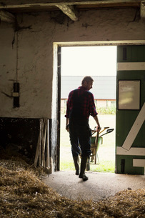 Rear view of man with wheelbarrow walking in barnの写真素材 [FYI02138253]
