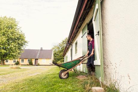 Man with wheelbarrow walking out of barn at farmの写真素材 [FYI02138777]