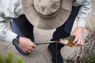High angle view of man pulling out bait from fish's mouthの写真素材 [FYI02138933]