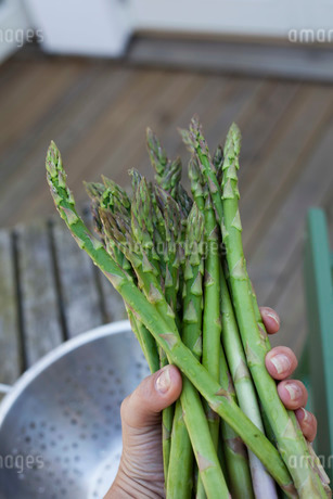 Close-up of woman's hand holding asparagusの写真素材 [FYI02139091]