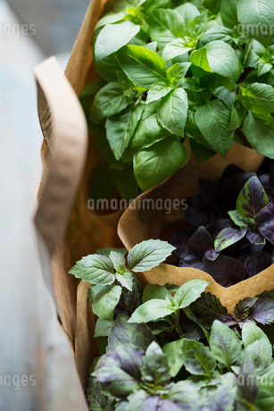 High angle view of plants in paper bagsの写真素材 [FYI02139574]