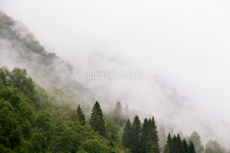Scenic view of trees in foggy weather on mountainの写真素材 [FYI02140844]