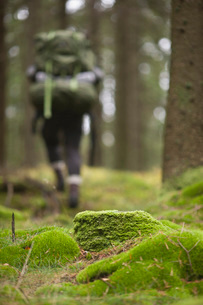 Mossy rocks in forest with hiker walking in backgroundの写真素材 [FYI02141345]