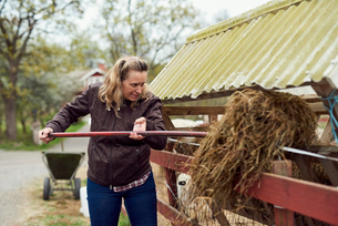 Female farmer putting hay in stable with pitchforkの写真素材 [FYI02141461]