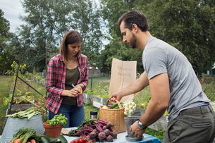 Mid adult couple arranging garden vegetables on tableの写真素材 [FYI02142955]