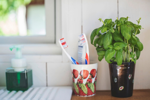 Toothbrush holder by houseplant on shelf against white wall in bathroomの写真素材 [FYI02143449]