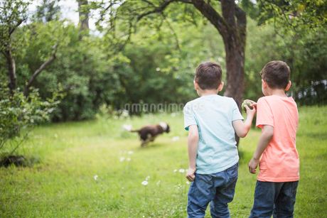 Rear view of brothers standing with ball while dog running on grass in back yardの写真素材 [FYI02144715]