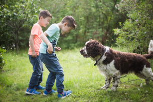 Twin brothers playing with dog on grass in back yardの写真素材 [FYI02144848]