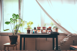 Houseplants on table by window at homeの写真素材 [FYI02145444]