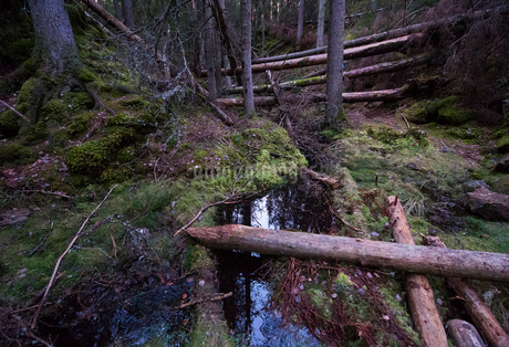 High angle view of logs over stream in forestの写真素材 [FYI02145907]