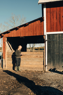 Full length of mature female farmer using mobile phone outside barnの写真素材 [FYI02145982]