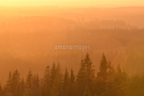 Scenic view of trees growing in forest during sunsetの写真素材 [FYI02146440]