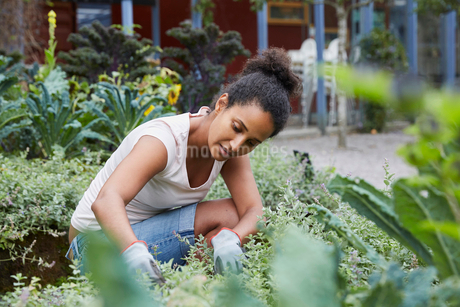 Woman analyzing plants at yardの写真素材 [FYI02146618]