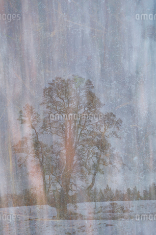 Digital composite image of tree on field against skyの写真素材 [FYI02146750]