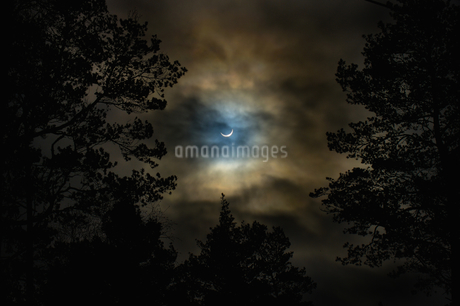Low angle view of moon in cloudy sky over silhouette treesの写真素材 [FYI02146884]
