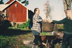 Mid adult female farmer handing basket full of straw to friend at organic farmの写真素材 [FYI02147084]
