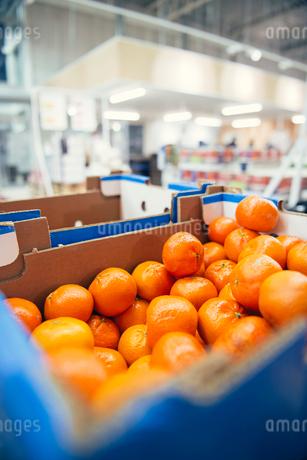 Fresh oranges in blue cardboard box at supermarketの写真素材 [FYI02147267]