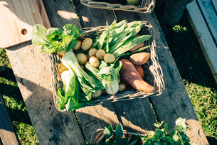 Directly above shot of fresh organic vegetables in basket on table at farmer's marketの写真素材 [FYI02147351]