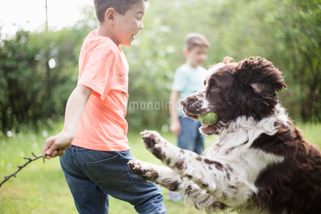 Boy and dog playing with brother standing in back yardの写真素材 [FYI02147403]
