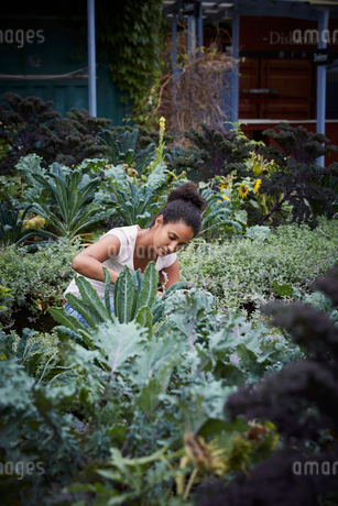 Young woman analyzing plants at yardの写真素材 [FYI02147408]