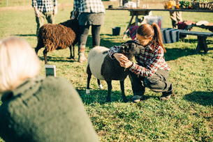 Mature female farmer embracing and kissing sheep on fieldの写真素材 [FYI02147412]