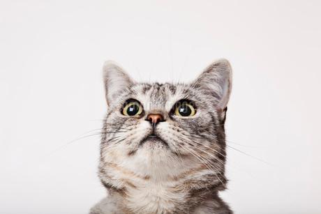 Close up of cat's faceの写真素材 [FYI02148401]