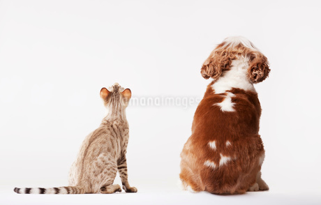 Dog and cat looking up togetherの写真素材 [FYI02148452]