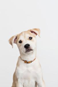 Close up of dog's curious faceの写真素材 [FYI02148510]