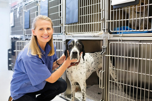 Vet placing dog in kennelの写真素材 [FYI02148652]