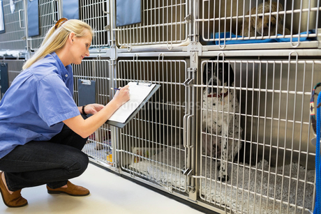 Vet checking dogs in kennelの写真素材 [FYI02148656]