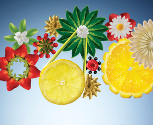 Illustration of fruits and vegetables in flower shapesの写真素材 [FYI02148960]