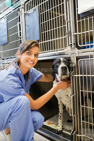 Smiling vet placing dog in kennelの写真素材 [FYI02149081]