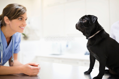 Veterinarian greeting dog in vet's surgeryの写真素材 [FYI02149378]