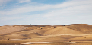 Trees growing in dry rural landscapeの写真素材 [FYI02149869]