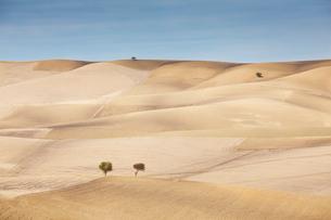 Trees growing in dry rural landscapeの写真素材 [FYI02150012]