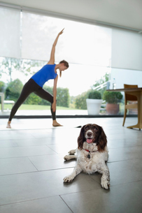 Dog with woman practicing yoga in living roomの写真素材 [FYI02150259]