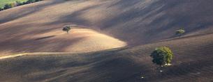 Trees growing in dry rural landscapeの写真素材 [FYI02150325]