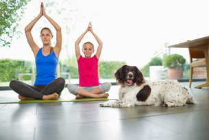 Dog sitting with mother and daughter practicing yogaの写真素材 [FYI02150333]