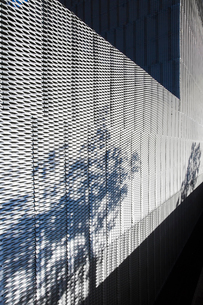Plants casting shadow on textured wall of modern buildingの写真素材 [FYI02154978]