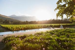 Luxury lap pool overlooking vineyard and mountainsの写真素材 [FYI02158315]