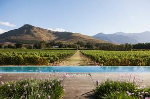 Luxury lap pool overlooking vineyard and mountainsの写真素材 [FYI02158425]