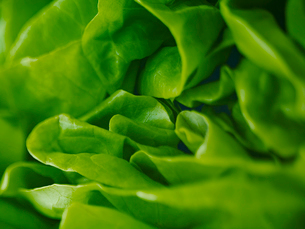 Extreme close up of round lettuceの写真素材 [FYI02158450]