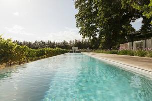 Luxury lap pool among vineyardの写真素材 [FYI02158580]