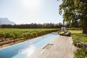 Luxury lap pool among garden and vineyardの写真素材 [FYI02159764]