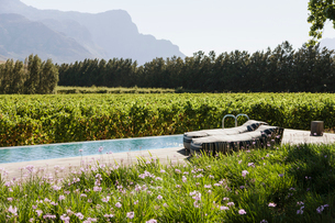 Lounge chairs by luxury lap pool among garden and vineyardの写真素材 [FYI02160016]
