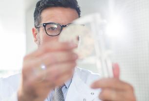 Scientist using caliperの写真素材 [FYI02160442]
