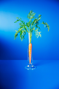 Carrot standing upright in glass on blue counterの写真素材 [FYI02161969]
